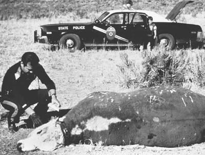 cattle mutilation