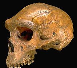 kabwe_skull